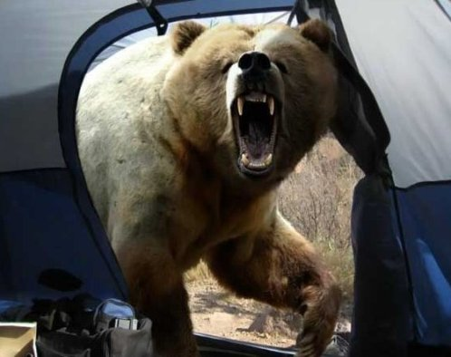 The only way out of the tent is through the bear's butt after it eats you and poops you out.